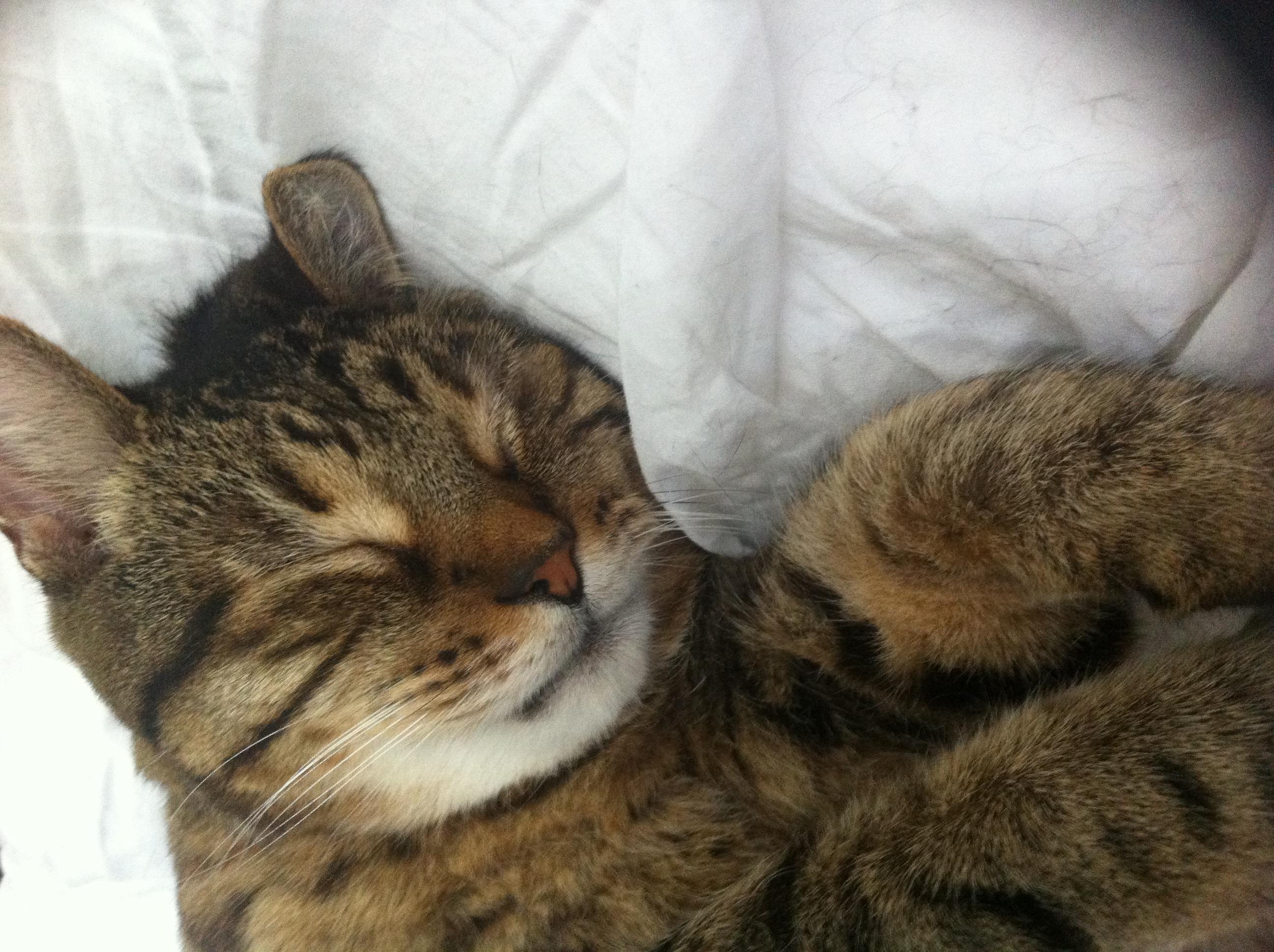 sleepy cal